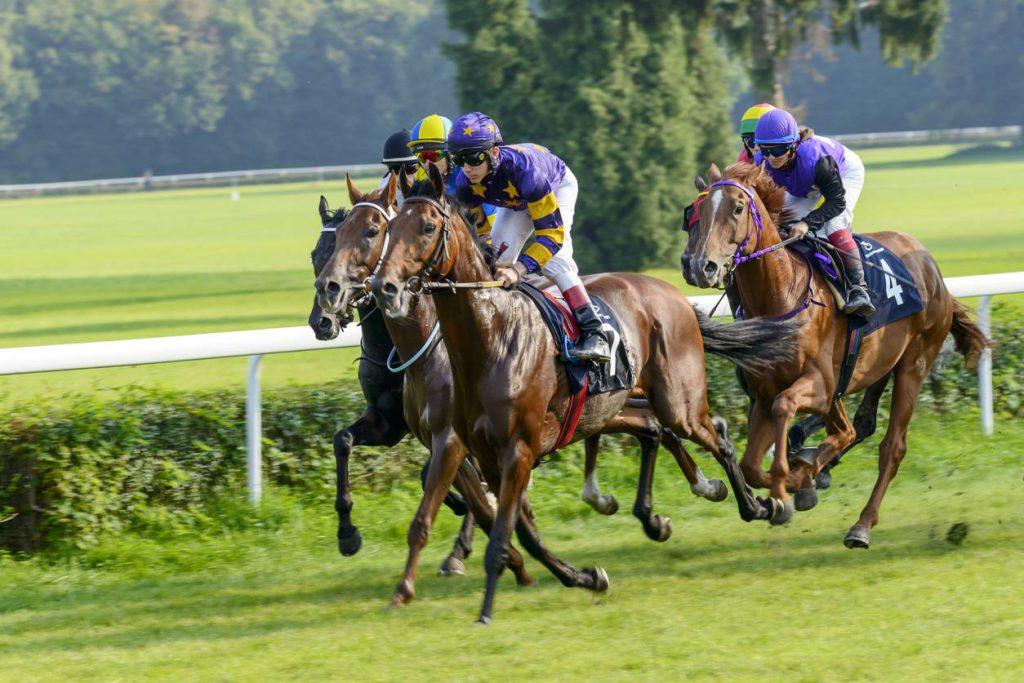 media-la-passion-des-chevaux